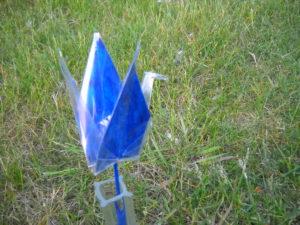 Blue crane...